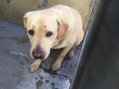 This is the story of a 4 year old Labrador pup called Wolfy who had a family, a place to stay, people to love her, people she could love, but days later bad thi