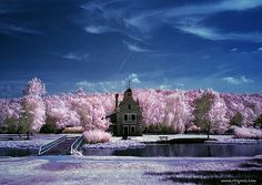 beautiful - the trees look like cotton candy