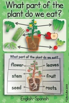 What part of the plant do we eat? fold & learn great science activity to teach with the book: Tops & Bottoms