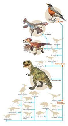5W Samples - Dinosaur Tree