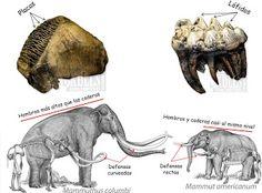 Beringia tierra de mamuts online dating