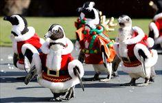 Mindenki várja a karácsonyt!