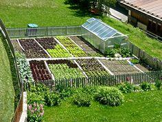 Vorrei fosse così il mio orto.