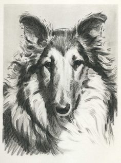 Soulful COLLIE  Vintage 1940s Dog  Print Morgan by plaindealing, $12.50