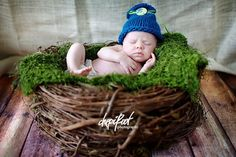 Wood Branch Nest, Owl Nest, Bird Nest, Newborn Nest, Newborn Photography, Baby Photography, Photo Prop, Beautiful Photo Prop on Etsy, $45.00