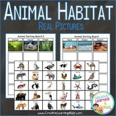 Top Ten Everyday Living Insurance Plan Misconceptions Animal Habitat Sorting Board Farm - Ocean - Desert - Forest - House - Jungle 2 Boards 8 12 X 11 2 Pages Of 30 Animal Cards 1 34 X 2 12 This Product Uses Real Photos That Are Realistic To Everyday Life. Zoo Activities Preschool, Sorting Activities, Kindergarten Science, Animal Activities, Science Classroom, Curriculum Mapping, Science Curriculum, Science Projects, Science Ideas