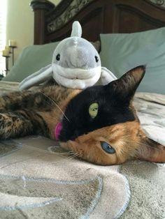 Venus is making friends during Shark Week