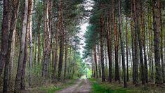 Nature wallpapers, desktop backgrounds hd, pictures and images Forest Wallpaper, Nature Wallpaper, Hd Wallpaper, Wallpapers, Hd Backgrounds, Hd 1080p, Beautiful Places, Landscape, Top