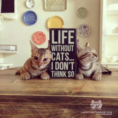 """Cats turn life from """"meh"""" to """"meoww""""... #cats #humor"""