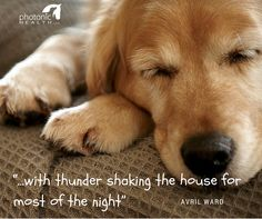 "Does your dog suffer from storm phobia? Summer approaching means lots of thunderstorms. Here is how one of our customers helped her dog get over the thunder.  ""I inquired about using the light for dog thunder anxiety. Well, after locating acupoints for fear and anxiety  lighting them for about 10 seconds each, my dog went quietly to his bed  fell sound asleep with thunder shaking the house for most of the night."" - Avril Ward  How awesome! Get everything you need for your pet's anxiety… Red Light Therapy, Phobias, Thunderstorms, Get Over It, Your Pet, 10 Seconds, Pets, Anxiety, Animals"