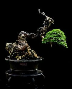 Bonsai...for some reason I see a reclining woman in this shape...really cool...