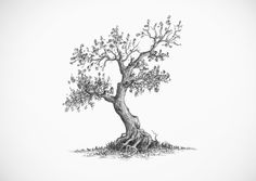 Art Drawing Tree Reference