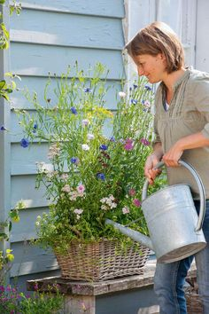 So that it hums and hums: bee-friendly balcony flowers-Damit es summt und brummt: Bienenfreundliche Balkonblumen Bee-friendly balcony flowers - Balcony Garden, Garden Planters, Fall Planters, Amazing Gardens, Beautiful Gardens, Balcony Flowers, Planters Flowers, Pot Jardin, Hydrangea Care