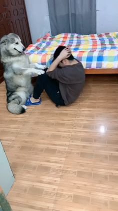 😂😂This husky is a good helper Cute Funny Dogs, Cute Funny Animals, Good Night Cat, Dog Playground, Cute Husky, Cute Dogs And Puppies, Doggies, Siberian Husky Puppies, Cute Animal Videos
