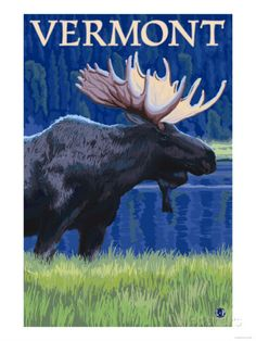 Vermont - Moose in the Moonlight Prints at AllPosters.com