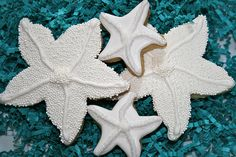 Starfish for the beach themed platters.