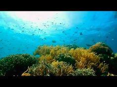 Great Barrier Reef | Australia's Great Natural Wonder