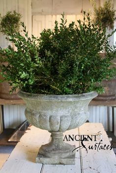 urn with box wood plant perfect understated vintage + greenery combo Urn Planters, Stone Planters, Cement Planters, Concrete Cement, Vases, Garden Urns, Outdoor Living, Outdoor Decor, Outdoor Life