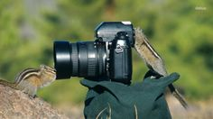 We often see photographs of wildlife or of photographers taking pictures of wildlife. But what about wildlife photographers? That is, animals taking pictures? Camera Wallpaper, Animal Wallpaper, Latest Wallpaper, Wallpaper Wallpapers, Computer Wallpaper, Animals And Pets, Funny Animals, Cute Animals, Wild Animals