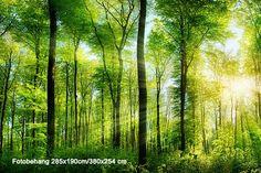 Vlies fotobehang Zonnestralen in het bos | Muurmode.nl