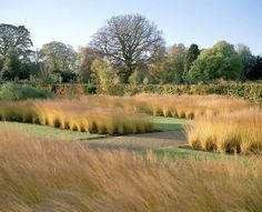 Amazing ornamental grasses by Piet Oudolf Landscape Architecture, Landscape Design, Garden Design, Modern Landscaping, Landscaping Plants, Meadow Garden, Garden Pond, Shade Garden, All Nature