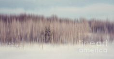 Pearly Winter by Jenny Rainbow. #FineArtPrints #Impressionism #PhotographyImpressionism #Purple #Winter #Snow #Woods #InteriorDesign #Pastel #PastelColors #Serenity #Relaxation #JennyRainbowFineArtPotography The impressionist photography stimulates the mind power to imagine what the artist wanted to suggest. This photography style lets your imagination flow, and recalls sentiments like nostalgia, melancholy or relaxation.