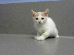 www.PetHarbor.com pet:MRVL.A453119