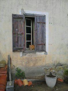 petit chat roux à la fenêtre