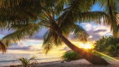 Seszele, Wyspa Praslin, Ocean Indyjski, Morze, Palmy, Wybrzeże, Wschód słońca, Chmury