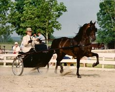 My first horse show at the Farmington Polo Grounds, I was brought by a little old couple in their 80's but they still drove their Morgans in the shows. Thanks Mr. and Mrs. Wolcott!!!!