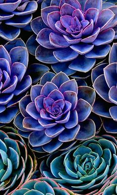 Succulents Wallpaper, Colorful Succulents, Flower Wallpaper, Planting Succulents, Planting Flowers, Succulents Drawing, Succulents Art, Propagating Succulents, Animal Wallpaper