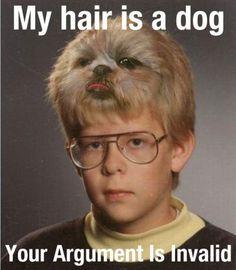 Hair Dog #Dog, #Hair