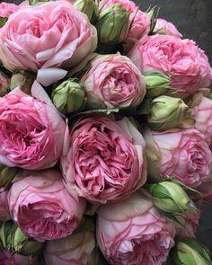 Flower Farm, My Flower, Pink Flowers, Beautiful Flowers, Peonies Bouquet, Peony, No Rain, Flower Aesthetic, Flower Wallpaper