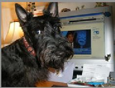 Georgie the Scottie dog