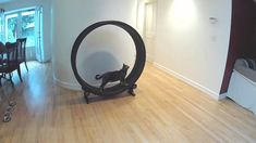 Exercise Wheel for Cats