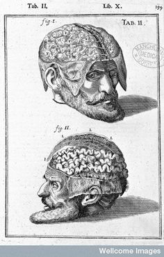 Spiegel, Adriaan van (1578-1625) and Casseri, Giulio (ca. 1552-1616). De humani corporis fabrica libri decem. Venice: Evangelista Deuchino, 1627. Plate of the brain exposed from Casserius – check out the BRAINS exhibition at the Wellcome collection, http://www.wellcomecollection.org/whats-on/exhibitions/brains.aspx