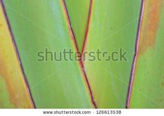 Close-up image of a palm leaf natural background image. - stock photo