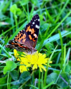 A Flutter of Colour by Judee Schofield on YouPic Macro Shots, Canon Eos Rebel, Colour, Nature, Color, Naturaleza, Off Grid, Natural, Mother Nature