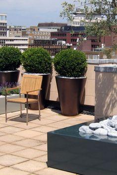 Buxinhos - Visite o site: www.casaecia.arq.br - Cursos on line - Design de Interiores e Paisagismo / Jardinagem.