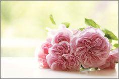 UtArt - Englische Rosen - Stillleben #floral #photoadaption #vintage #shabby #homedecor #walldecor  #utart #print #poster #shabby-chic #flowers #flower #rose #roses #pink #pattern