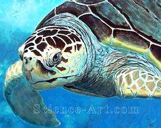 Portrait of a loggerhead sea turtle. T Turtle, Sea Turtle Art, Sea Turtles, Amphibians, Mammals, Sea Turtle Images, Watercolor Portrait Tutorial, Loggerhead Turtle, Turtle Painting