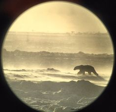 My Iphone + a Telescope. Managed to snap this outside the lodge during a snow storm. - Imgur This is beautiful
