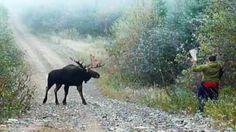 Hunting for MOOSE with wood. Охота на лося с дерева.