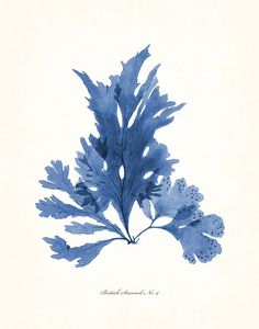 Vintage Indigo Blue British Seaweed Print Series No. 4, Giclee, Art Print, Nautical Art, Beach Decor, Coastal Art, Collage, Illustration