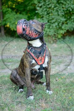 Perfectly Designed #Amstaff #Dog #Muzzle With Easy-Fixed Buckles