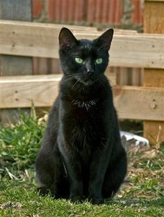 Black Cat by PicturesOfCats, via Flickr