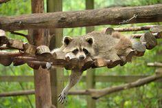 Lazy Danglin' kinda Day