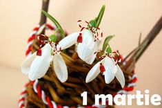 ghiocei 1 martie martisor 8 Martie, Daffodils, Spring Time, Halloween Party, Clip Art, Christmas Ornaments, Holiday Decor, Plants, Gifts