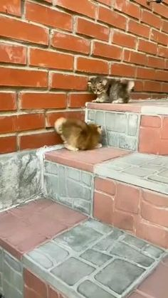 Funny Animal Videos, Funny Animal Pictures, Cute Funny Animals, Cute Baby Animals, Funny Dogs, Cute Cats And Kittens, Kittens Cutest, Cute Baby Bunnies, Cat Love