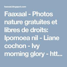 Faaxaal - Photos nature gratuites et libres de droits: Ipomoea nil - Liane cochon - Ivy morning glory - https://faaxaal.blogspot.com/2018/03/ipomoea-nil-liane-cochon-ivy-morning-glory.html